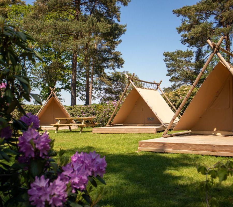 Camping-zuid-ginkel_bezoek-juni-14.jpg